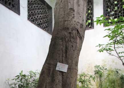 60-朴树
